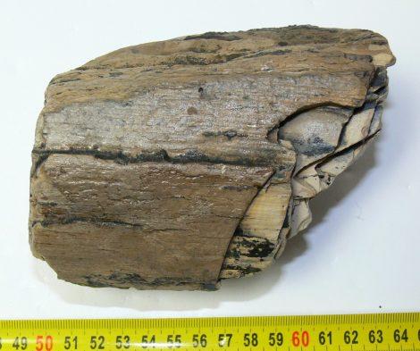 Mammuthus meridionalis partial tusk (626 grams)