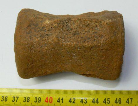 Miocén korú cet csigolya Danitz- pusztáról