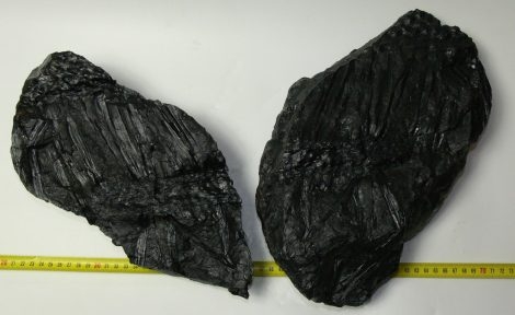 Stigmaria ficoides root fossil pair from the Czech Republic (10,1 Kg)