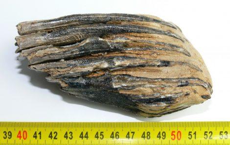 Mammuthus primigenius partial tooth (400 grams)