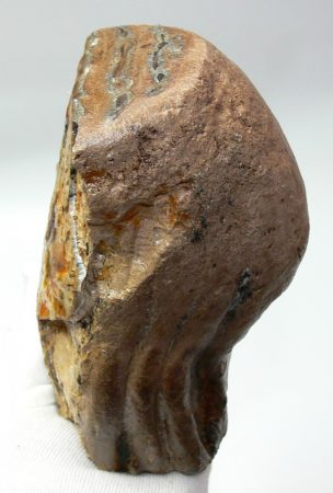 Mammuthus sp. partial tooth (1729 grams)
