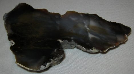 Wood fossil from Hungary, Kiskunlacháza