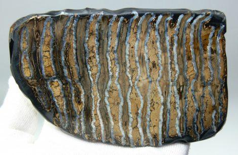 Stabilizált mamut fog szelet (115 x 82 mm)  ELFOGYOTT (LL B) 04