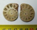 Kettévágott kalcit kristályos ammonitesz Sengenthalból