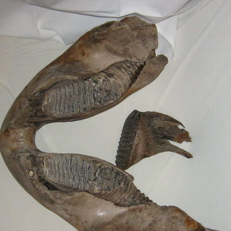 faopalfossils
